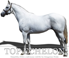 Logo for Top Echelon Ad